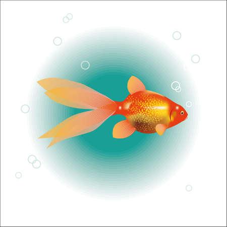 ichthyology: illustration of a goldfish.