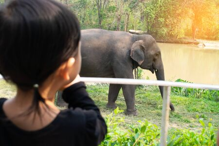 Girls are watching elephants eating fruits that people bring to raise. Stock Photo