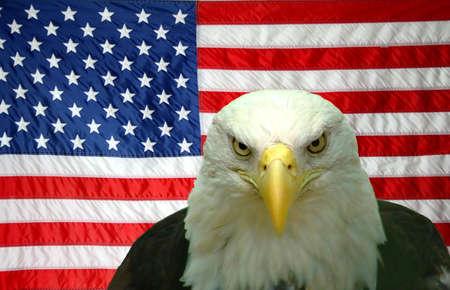 aguilas: �guila calva americana en-delantera de la bandera americana Foto de archivo