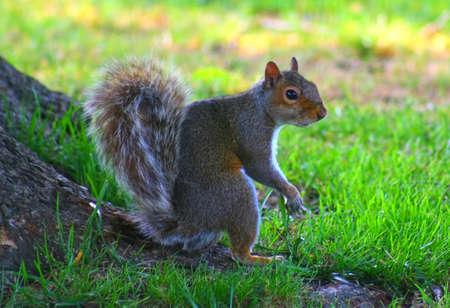 Squirrel Wanting a Friend Standard-Bild
