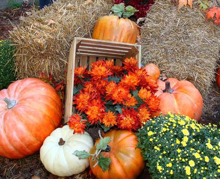 Fall pumpkin arrangement with orange flower and mums Standard-Bild