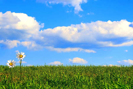 Surreal view of shasta daisies in a green field leading to a bright beautiful blue sky. Standard-Bild