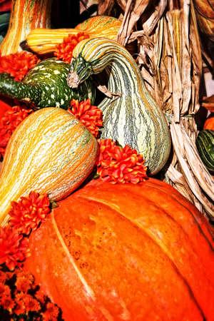 Fall Decoration Standard-Bild