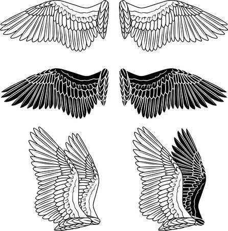 tatouage ange: Ailes de pigeon isol� sur blanc Illustration