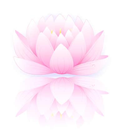 flor loto: Ilustración vectorial de loto rosa sobre fondo blanco