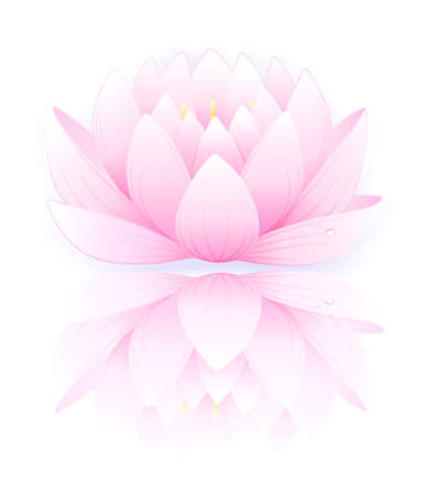 lotus: Vector illustration of pink lotus isolated on white background