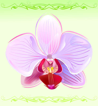 Orchid on spring background  Vector
