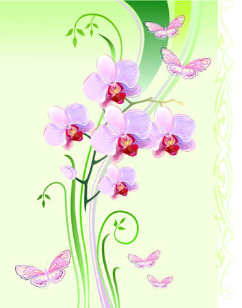 Orchids and butterflies on green background  Vector
