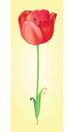 beautiful red tulips close up: Tulip  Illustration