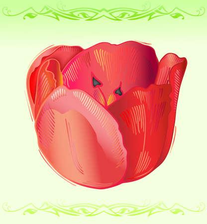 Tulip Stock Vector - 11358032