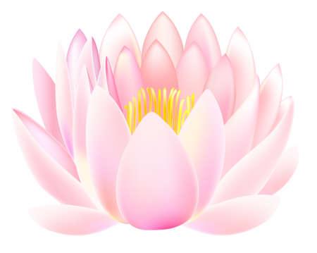 flor de loto: Loto