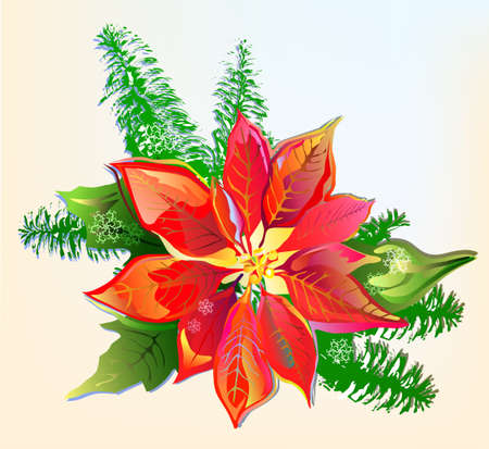 christmas motif: Christmas Poinsettia  Illustration