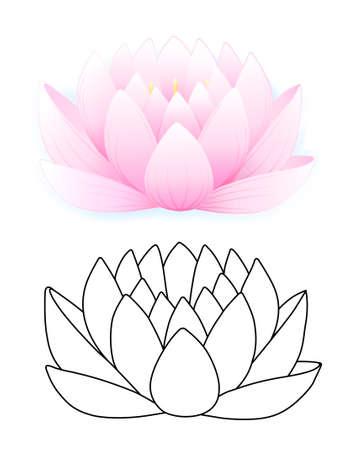 Pink lotus Stock Vector - 11357641