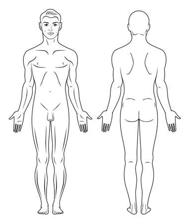 nude male: Full length front, back view of a standing naked man  Illustration