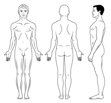 homme nu: Profil pleine longueur, avant, vue arrière d'un homme debout, nu,