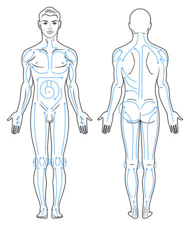 nude male: Closeup portrait of a young man with massaging lines. Full length front, back view of a standing naked man Illustration