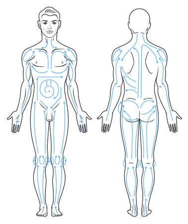 naked man: Retrato de un hombre joven con las l�neas de masaje. Frontal de cuerpo entero, Vista posterior de un hombre desnudo de pie Vectores