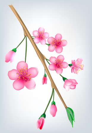 Vector illustration of a flowered sakura, japanese cherry tree