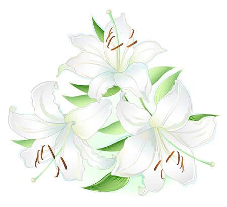 houseplant: white lilly
