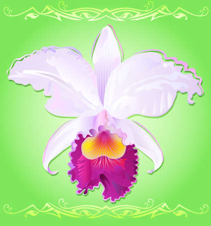 orchid cattleya trianae Vector
