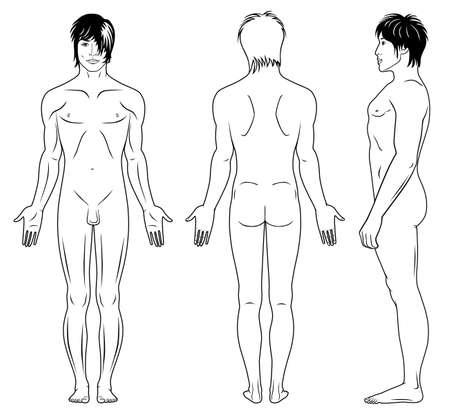hombre desnudo: Perfil de cuerpo entero, frontal, vista posterior de un hombre desnudo Vectores