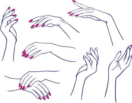 manicura: Manos de mujer Vectores