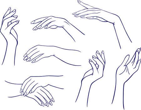hands free: Manos de mujer Vectores