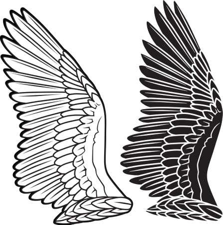 Dove wings  Illustration