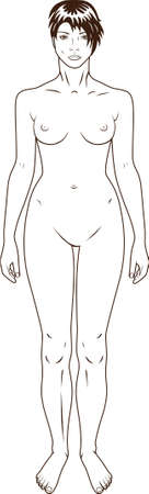 naked female body: Naked standing woman vector