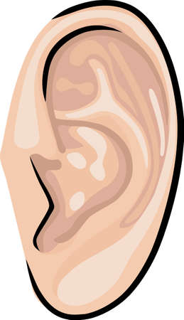 sense: Human ear  Illustration