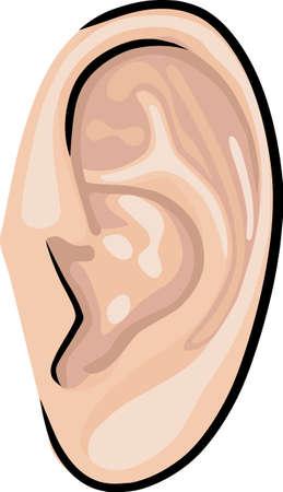 L'oreille humaine Banque d'images - 12008088
