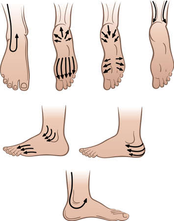 toe: Closeup man feet with massaging lines (vector illustration)