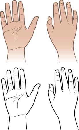 mano derecha: Mujer, las manos del hombre aislado en blanco Vectores