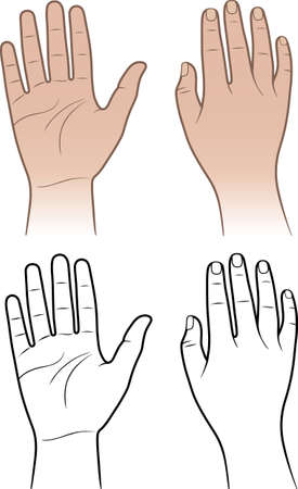 Woman, man hands isolated on white  Vector