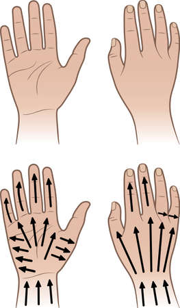 hand illustration: Woman, man hands isolated on white