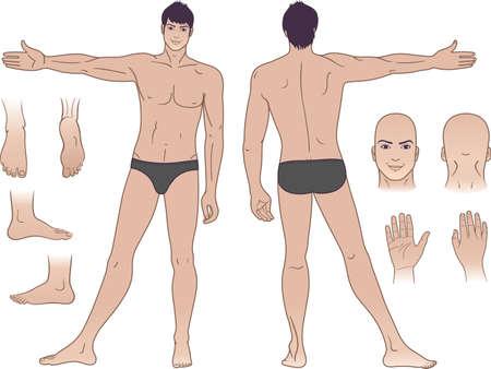leg muscle: De longitud total (frente y, de vuelta) puntos de vista de un hombre de pie
