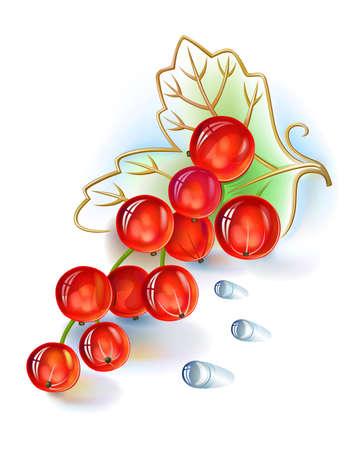 レッドカラント: 白い背景で隔離の葉と露の滴の赤スグリの実ベクトル束。