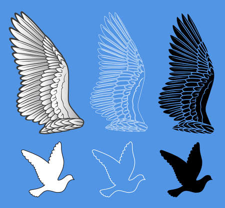 dove in flight: Pigeon wings and dove linear silhouette isolated on background