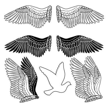 tattoo wings: Pigeon wings and dove linear silhouette isolated on background
