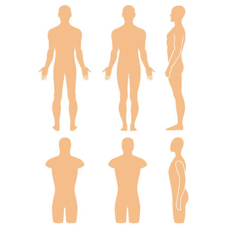 nude male body: Male mannequin outlined silhouette torso (front, back, side view). Vector illustration isolated on white background. You can use this image for fashion design and etc.