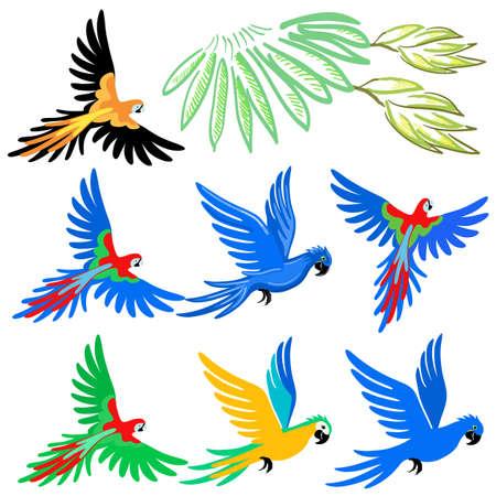 cotorra: Conjunto de patrón de loro guacamayo, ilustración vectorial aislados en fondo blanco