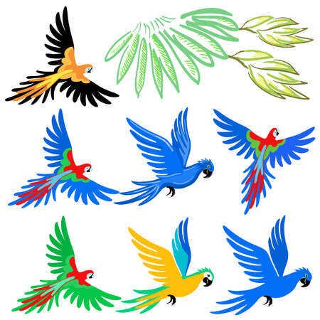 flying: Macaw parrot pattern set, vector illustration isolated on white background Illustration