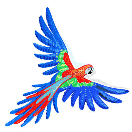 macaw parrot: Macaw parrot, vector illustration isolated on white background Illustration