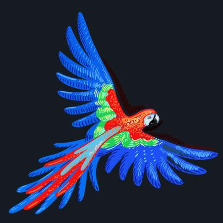 flight: Macaw parrot, vector illustration isolated on dark background Illustration