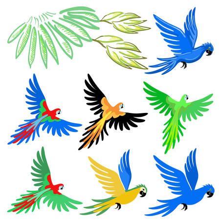 papagayo: Conjunto de patr�n de loro guacamayo, ilustraci�n vectorial aislados en fondo blanco