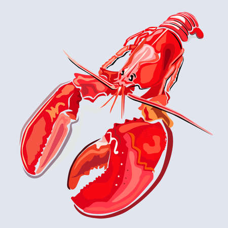lobster: Lobster, vector illustration isolated on grey background Illustration