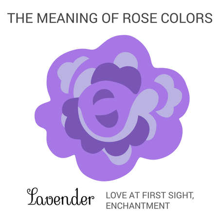 enchantment: Lavender rose infographics, vector illustration isolated on white background