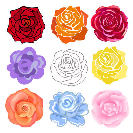 varicolored: Varicolored roses set isolated on light background, vector illustration