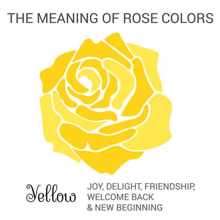 Rose jaune infographies, illustration vectorielle isolé sur fond blanc Banque d'images - 47920781