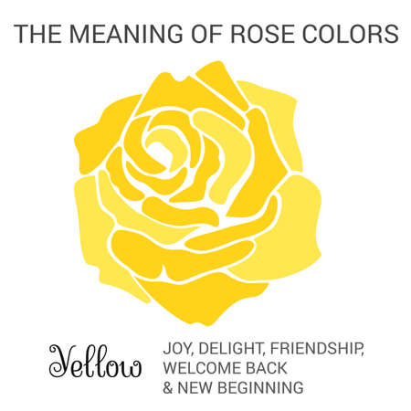 new beginning: Yellow rose infographics, vector illustration isolated on white background